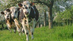 filiere-bovin-lait