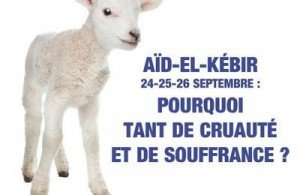 AId Fondation BB